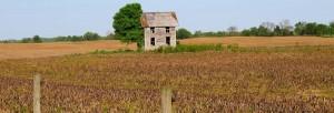 Feral cornhouseSmal