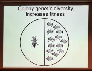 Colony diversity