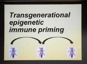 Epigenetic finetuning