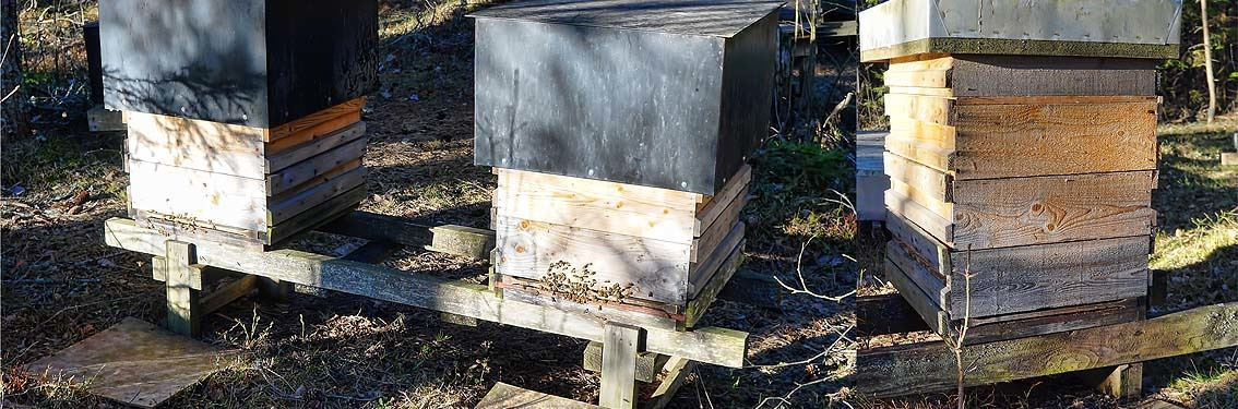Struggle for resistant bees