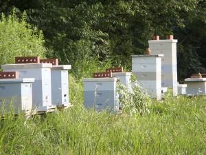 Reid Hives