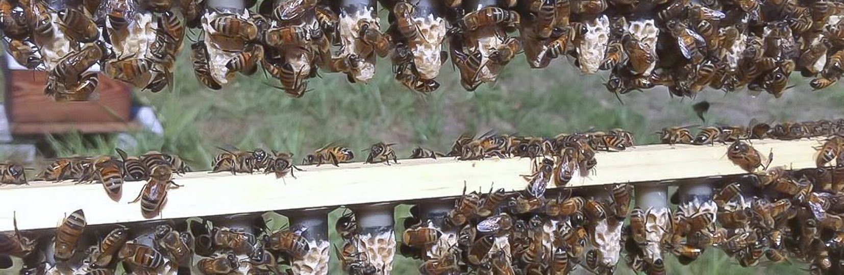 A passionate treatment free beekeeper