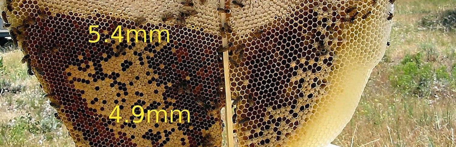 Darwinian beekeeping, cell size and fitness