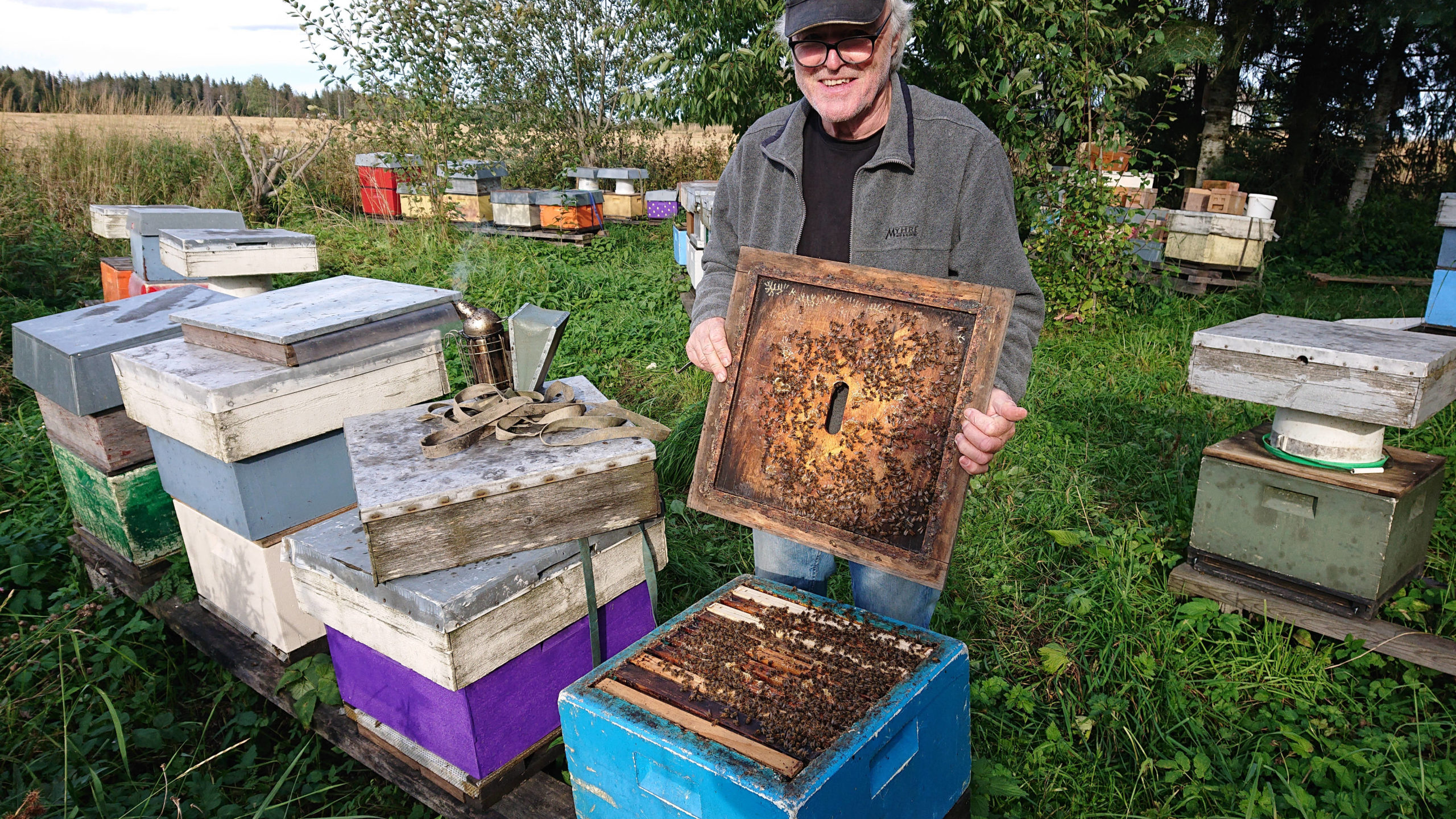 Varroa Resistant Bees In Norway