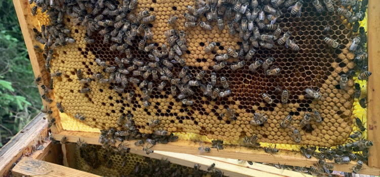 The road to varroa resistant bees