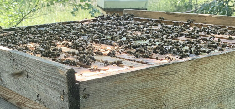 Varroa resistance – the two traits